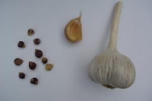 Allium sativum ssp. sagittatum Anka