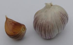 Allium sativum ssp. sagittatum Bestovje