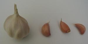 Allium sativum [50 bulbils] Cinta