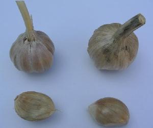 Allium sativum ssp. sagittatum Donja Lomnica (Velika Gorica)
