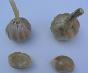 Allium sativum ssp. sagittatum [50 bulbils] Donja Lomnica (Velika Gorica)