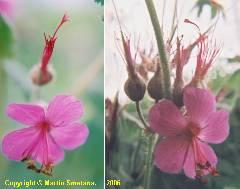 Exotická louka (směs exotických druhů rostlin, smes je určena výhradně do zahrádek, není určena na výsev do volné krajiny) - od podzimu 2017 nové složení