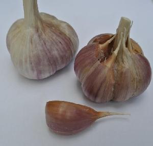 Allium sativum ssp. sagittatum Havran