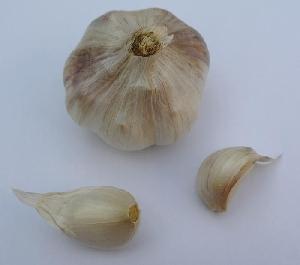 Allium sativum ssp. sagittatum Križevci