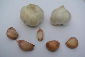 Allium sativum ssp. sativum Lika