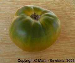 Lycopersicon esculentum convar. esculentum Evergreen
