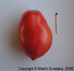 Lycopersicon esculentum convar. esculentum Large Plum
