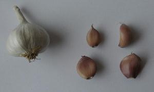 Allium sativum ssp. sagittatum Makó