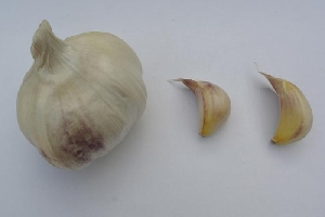 Allium sativum ssp. sativum Malkenes
