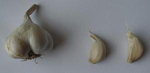 Allium sativum ssp. sativum [50 bulbils] Mojmír