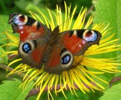 Motýlia lúka (zmes kvitnúcich druhov rastlín poskytujúca potravu i úkryty pre motýle a hmyz a ich vývinové štádiá) - od jesene 2017 nové zloženie