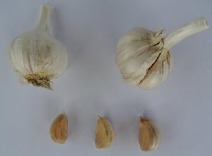 Allium sativum ssp. sagittatum [50 bulbils] Novi Vinodolski hardneck 1