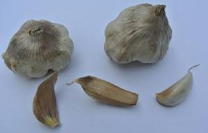 Allium sativum ssp. sativum Opuzen