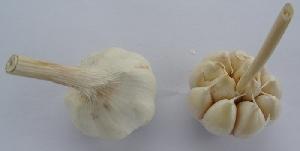 Allium sativum ssp. sagittatum Primorje