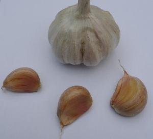 Allium sativum ssp. sagittatum Rinkovec