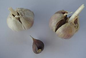 Allium sativum ssp. longicuspis Russian (Finland)
