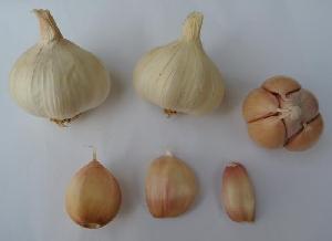 Allium sativum ssp. sativum Split Pink