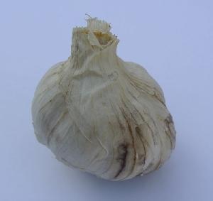 Allium sativum ssp. sagittatum Stanik