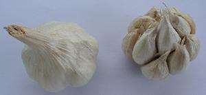 Allium sativum ssp. sativum Štěpán