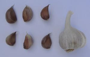 Allium sativum ssp. sagittatum Tristan