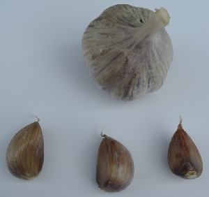 Allium sativum ssp. sagittatum [50 bulbils] Trubač
