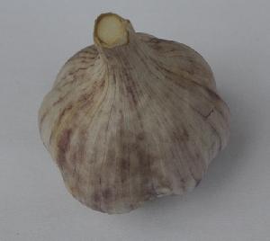 Allium sativum ssp. sagittatum [25 g bulbils] Vekan