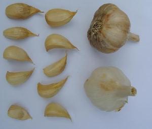 Allium sativum ssp. sativum Vessalico