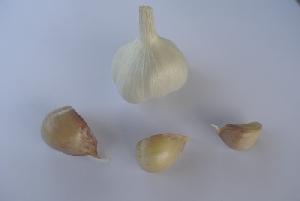 Allium sativum ssp. sativum Virovitica softneck 1