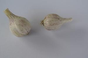 Allium sativum ssp. sagittatum Virovitica hardneck 2