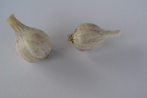 Allium sativum ssp. sativum [50 bulbils] Virovitica softneck