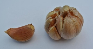 Allium sativum ssp. sagittatum [25 g bulbils] Zabok