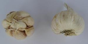 Allium sativum ssp. sativum Záhorský